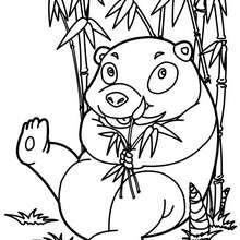 Coloriage de PANDA - Coloriage - Coloriage ANIMAUX - Coloriage ANIMAUX d'ASIE et OCEANIE - Coloriage PANDA