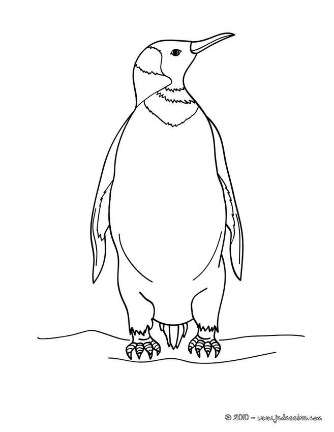 Coloriages coloriage d 39 un pingouin - Dessin pinguoin ...