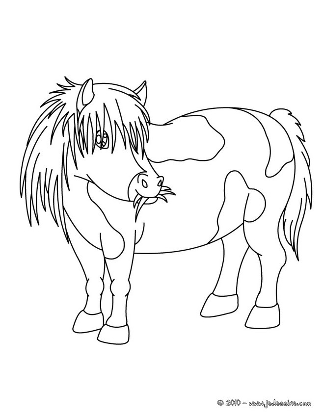 Coloriages coloriage d 39 un poney shetland - Coloriage poney ...