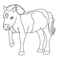 Coloriages cheval un poulain couch - Coloriage poulain ...