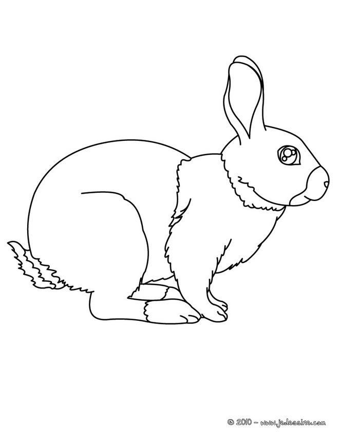Coloriages coloriage gratuit d 39 un lapin - Un lapin dessin ...