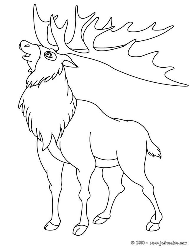 Coloriages coloriage d 39 un renne - Coloriage de renne ...