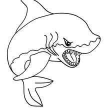 Coloriage du SHARK - Coloriage - Coloriage ANIMAUX - Coloriage ANIMAUX MARINS - Coloriage REQUIN