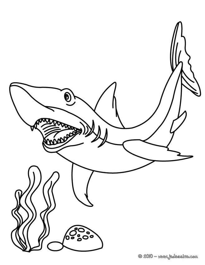 Coloriage d'un requin mako