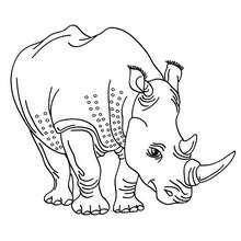 Coloriage d'un rhinocéros blanc