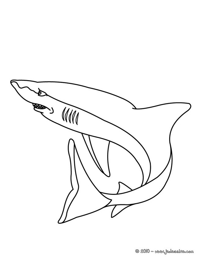 Coloriage d'un requin blanc