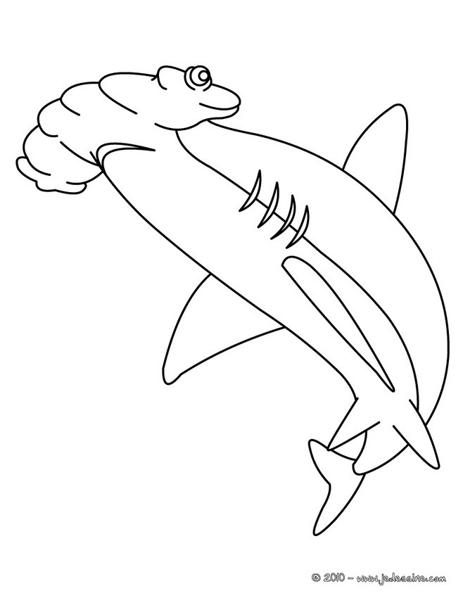 Coloriages coloriage d 39 un requin marteau - Dessin de requin blanc ...