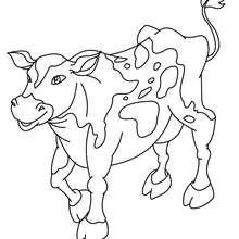 Coloriage d'une vache normande