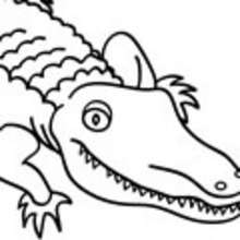 Coloriage d'un gros crocodile