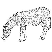Coloriage Bebe Zebre.Coloriages Coloriage D Un Zebre Dans La Savane Fr