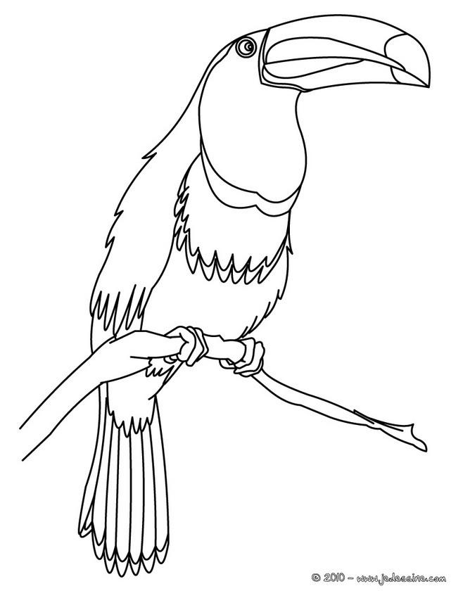 Coloriages toucan colorier - Coloriage toucan a imprimer ...