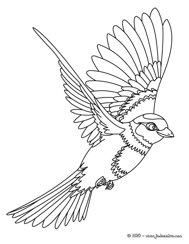 Comment dessiner des hirondelles for Flying crow coloring page