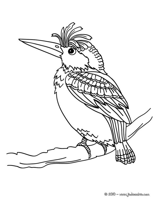 Coloriages oiseau colorier gratuitement - Coloriage perruche ...