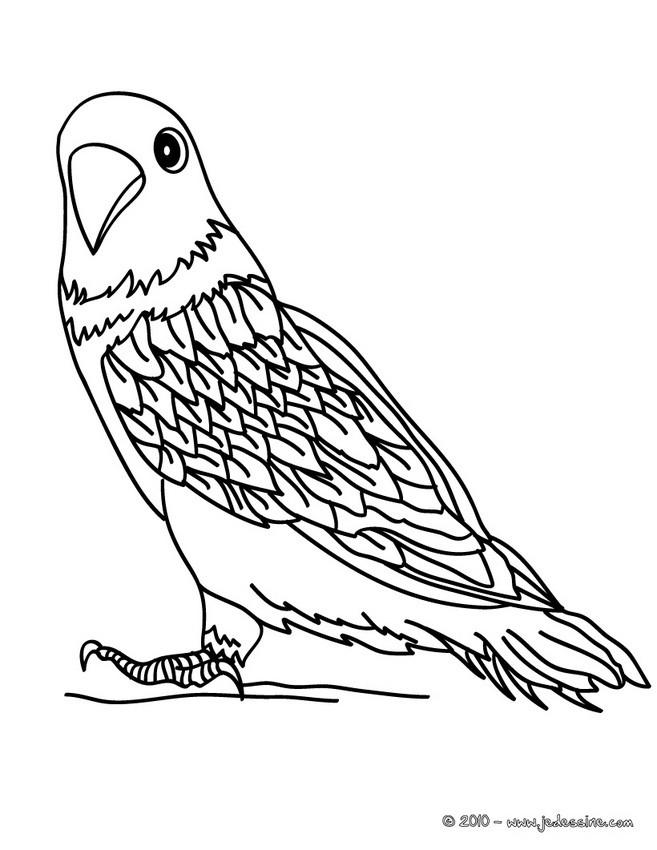 Coloriage Animaux Oiseaux.Coloriage D Oiseaux Coloriages Coloriage A Imprimer Gratuit Fr