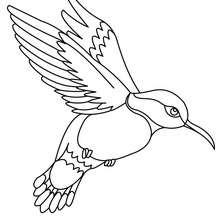 Coloriages coloriage d 39 un colibri - Oiseau mouche dessin ...