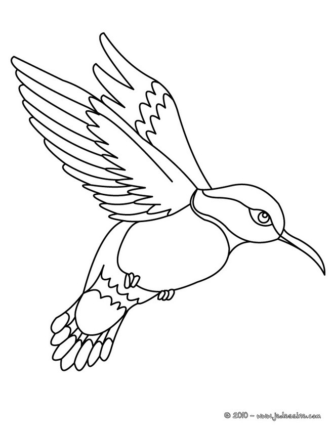Coloriages coloriage d 39 un colibri - Dessins oiseau ...