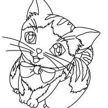 Coloriage : Bébé chat avec un collier