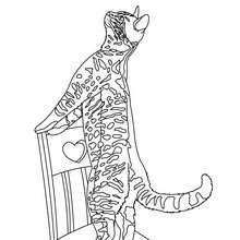 Coloriage : Chat tigré