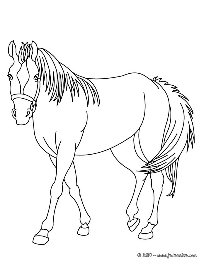 coloriage cheval dindien