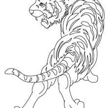 Coloriage : Tigre à colorier