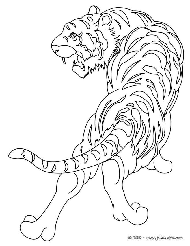 Coloriages tigre colorier - Image dessin tigre ...