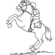 Coloriage d'un cheval cabré