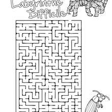 Labyrinthe Difficile Insects&co
