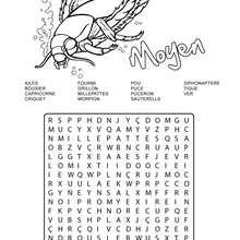 Moyen : 15 insectes cachés - Jeux - Les mots mêlés - Les mots mêlés de Insects&co