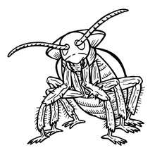Coloriage BLATTE - Coloriage - Coloriage ANIMAUX - Coloriage INSECTE - Coloriages Insects&Co