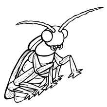 Coloriage CANTHARIDE - Coloriage - Coloriage ANIMAUX - Coloriage INSECTE - Coloriages Insects&Co