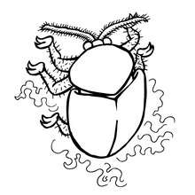 Coloriage CASSIDA - Coloriage - Coloriage ANIMAUX - Coloriage INSECTE - Coloriages Insects&Co
