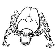 Coloriage CETONIA - Coloriage - Coloriage ANIMAUX - Coloriage INSECTE - Coloriages Insects&Co