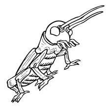 Coloriage CRIQUET - Coloriage - Coloriage ANIMAUX - Coloriage INSECTE - Coloriages Insects&Co