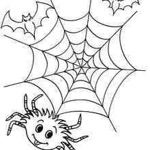 Coloriage d'Halloween : toile araignée a colorier