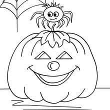 Coloriage d'Halloween : citrouille et araignée à colorier