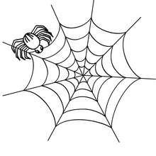 toile d'araignée halloween - Coloriage - Coloriage FETES - Coloriage HALLOWEEN - Coloriage ARAIGNEE HALLOWEEN