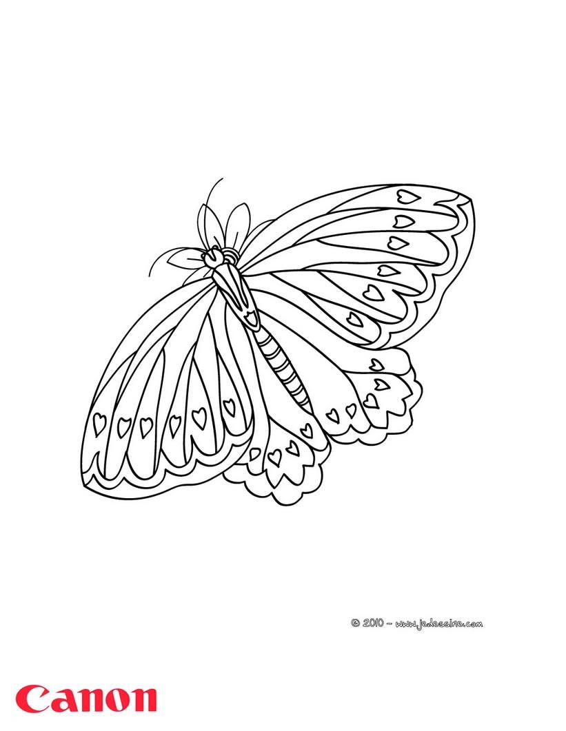 Coloriages un papillon imprimer avec canon pixma - Coloriage a imprimer papillon ...