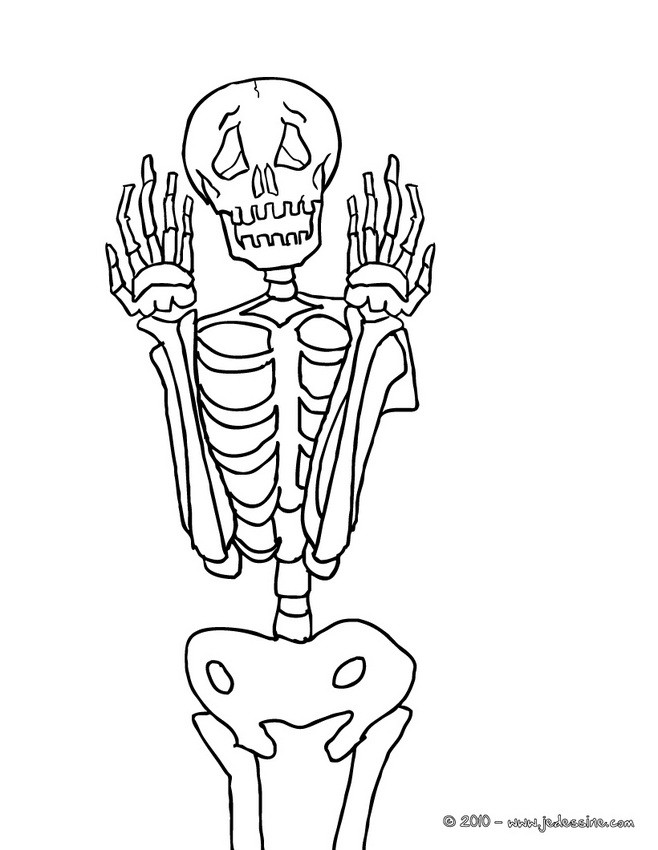 Coloriages squelette gratuit colorier - Coloriage squelette halloween ...