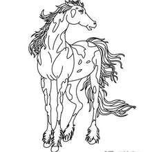 Un cheval à imprimer avec Canon PIXMA - Coloriage - Coloriage A IMPRIMER - Coloriage Canon PIXMA