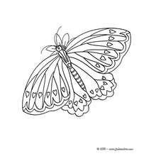 Coloriage : Un papillon à imprimer avec Canon PIXMA