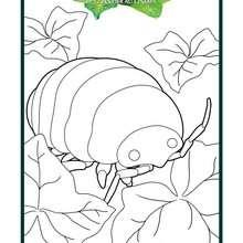 Coloriage : Insecte géant dans Arrietty