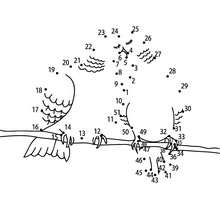Jeu de points à relier : Couple pigeons points à relier moyen