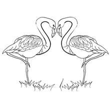 Coloriage couple flamants roses
