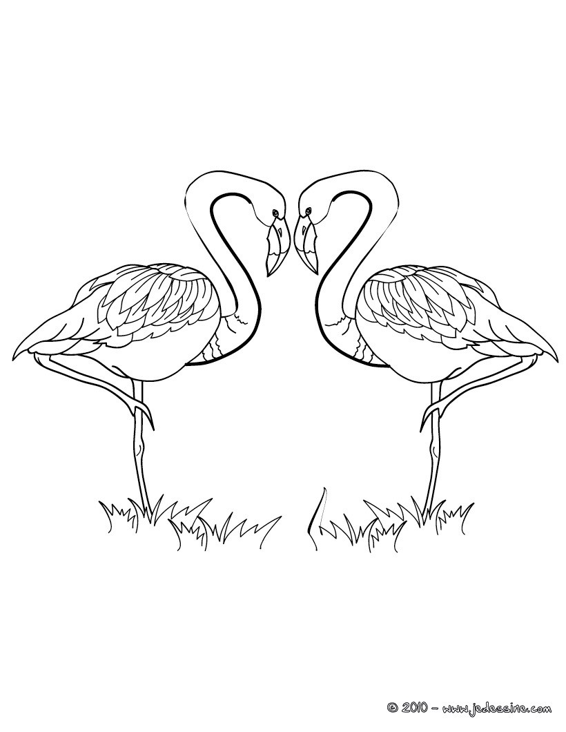 coloriages coloriage couple flamants roses. Black Bedroom Furniture Sets. Home Design Ideas