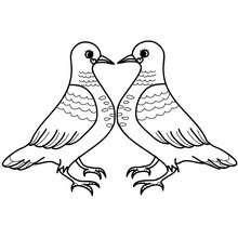 Coloriage couple pigeons gratuit - Coloriage - Coloriage FETES - Coloriage SAINT VALENTIN - Coloriage COUPLE DE LA SAINT VALENTIN