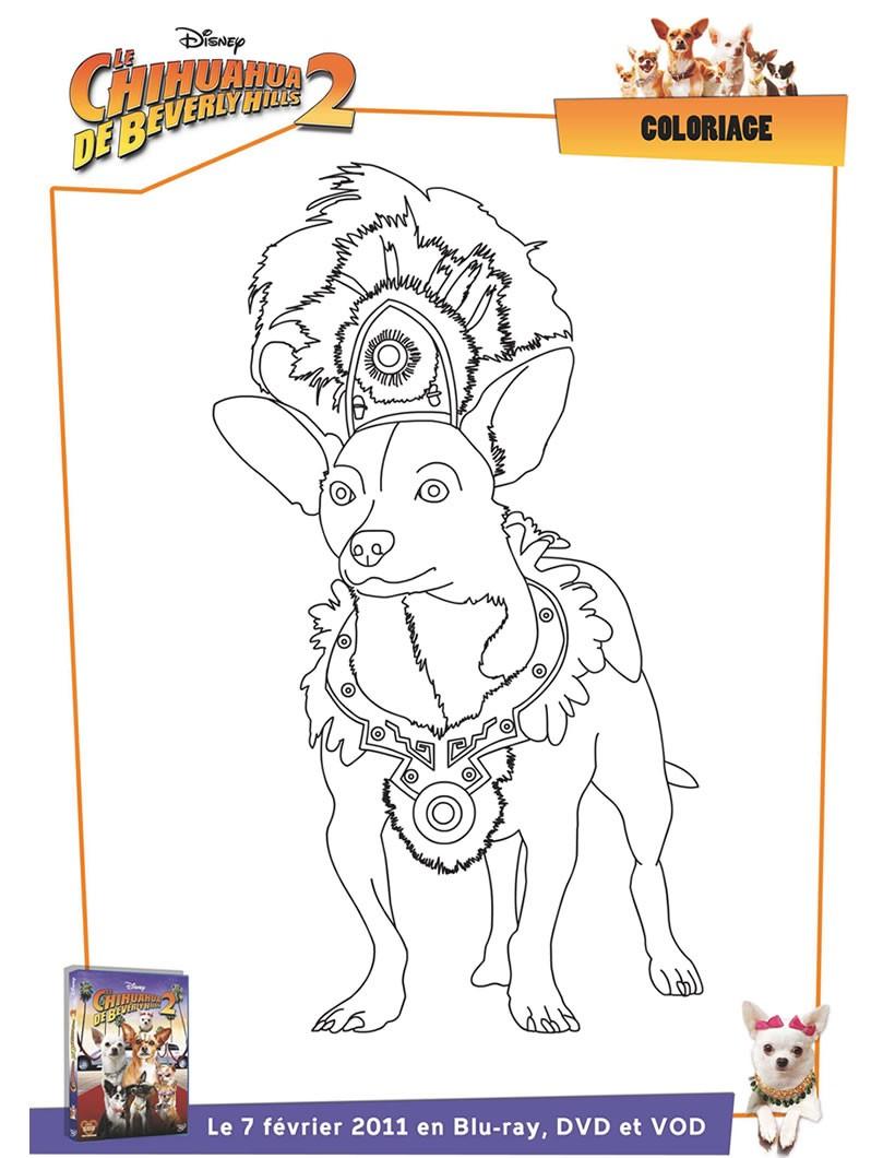 Coloriage Le Chihuahua de Beverly Hills Imprimer