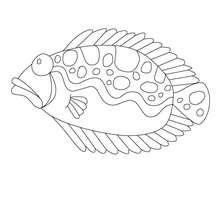 Poisson plat  colorier en ligne - Coloriage - Coloriage FETES - Coloriage POISSON AVRIL