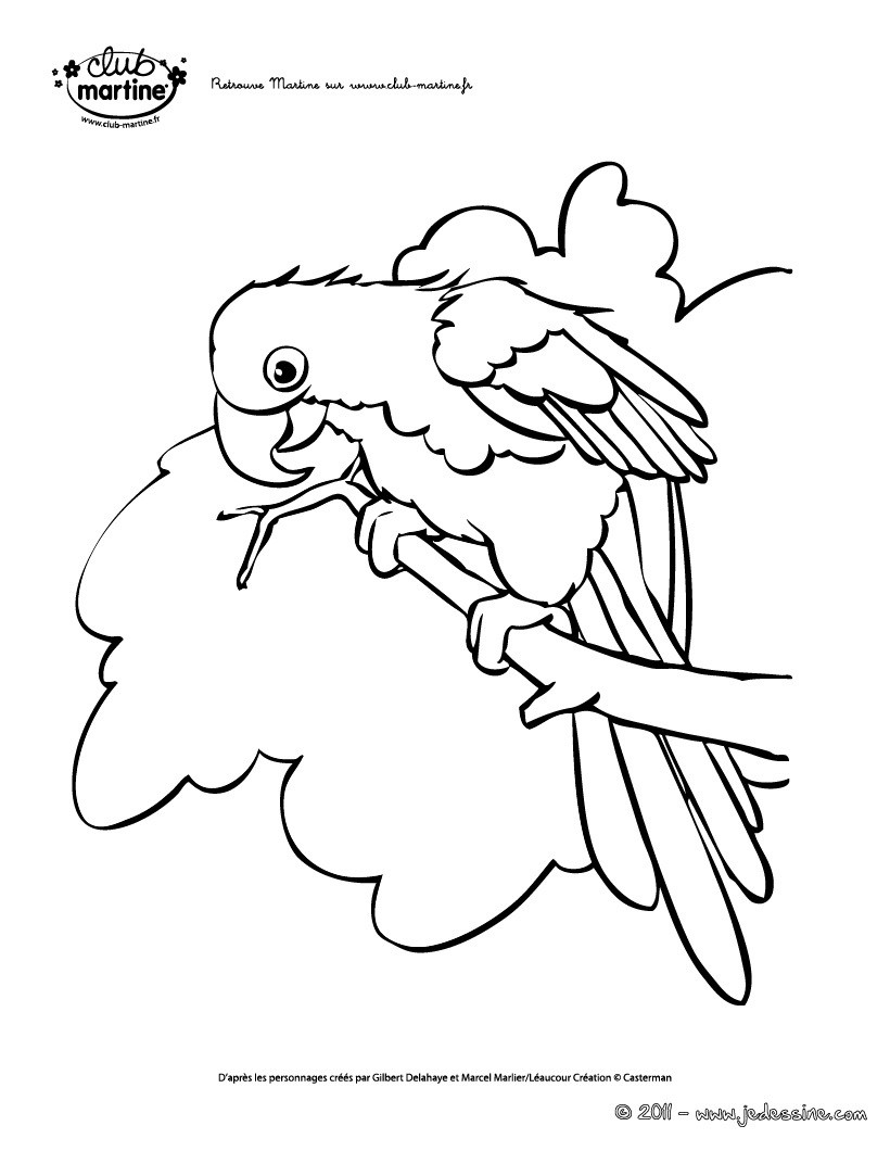 Coloriages martine coloriage perroquet gratuit - Martine dessin ...