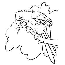 Martine Coloriage perroquet gratuit - Coloriage - Coloriage PERSONNAGE BD - Coloriage MARTINE