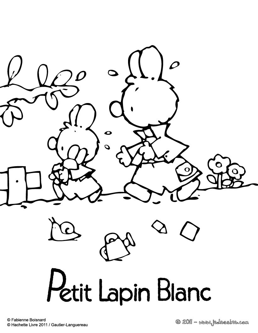PETIT LAPIN BLANC  colorier